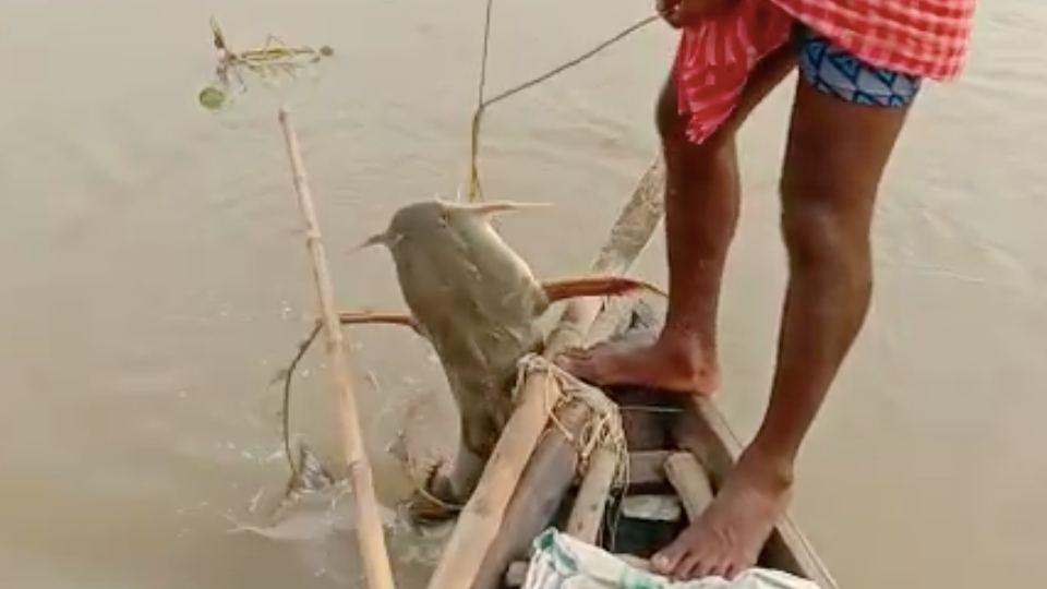 ভাগীরথী নদীতে মিললো বিরল প্রজাতির মাছ! ওজন প্রায় ২০ কেজি