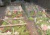 কলকাতাগামী ট্রেনে চেপে খাঁচাবন্দী শতাধিক টিয়াপাখি পাচারের ধান্দা! রেলপুলিশের হাতে ধৃত ১ পাচারকারী